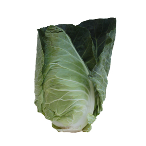 Pointed cabbage can be grown and supplied whole or sliced.